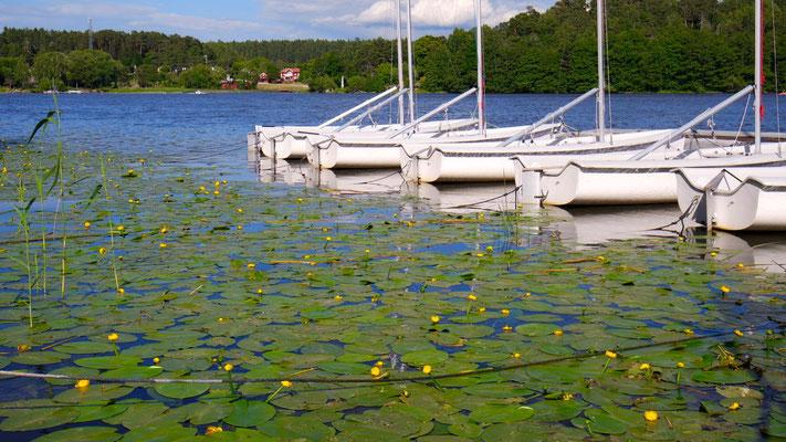 Am Mälaren-See bei Uppsala ist es Sommer - auch für uns!
