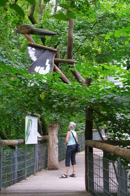 Studium auf dem Baumkronenpfad