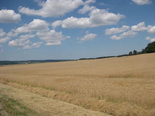 Unendliche Kornfelder