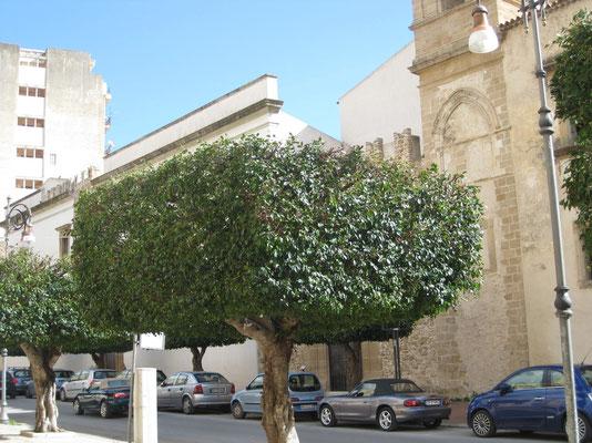 .... finden sich in den Städten Italiens und auf Sizilien