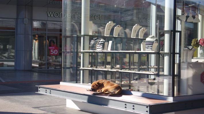 Griechische Hunde finden immer exklusive Sonnenplätzchen