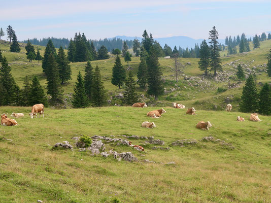 Die Jura ähnliche Umgebung ist von Juni bis September ihr zu Hause