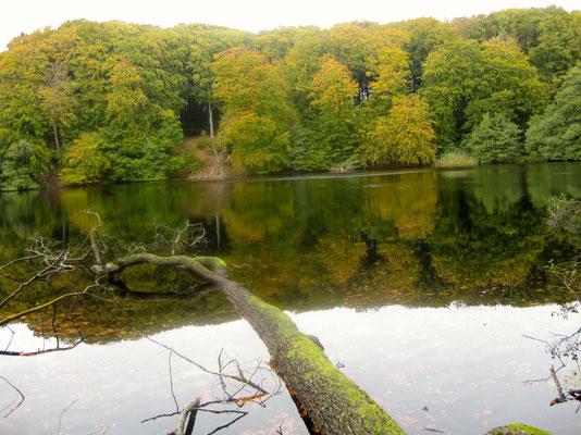 Herbstliche Reize im Nationalpark