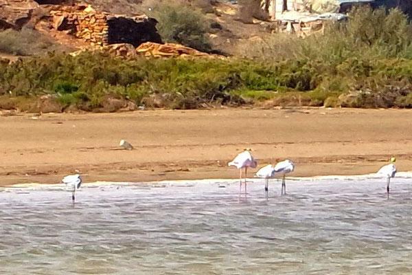 Die Flamingos lieben offensichtlich die Einsamkeit