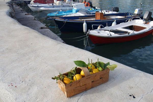 Der Zitronenvorrat aus Agios Ioannis