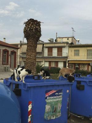 DER Katzentreff in Drepano-Dorf!