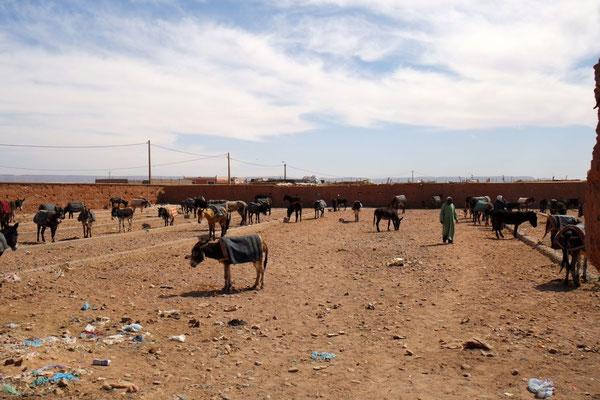 Der Eselparkplatz - nach Marktende ist ihr Einsatz für die Heimkehr gefragt