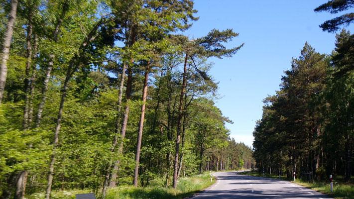 In DIESEM Wald erblickten wir den staunenden Elch - er fehlt hier auf dem Bild!