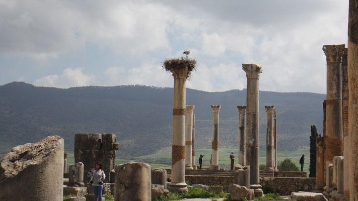 Nach den Römern hausen hier nur noch die Störche