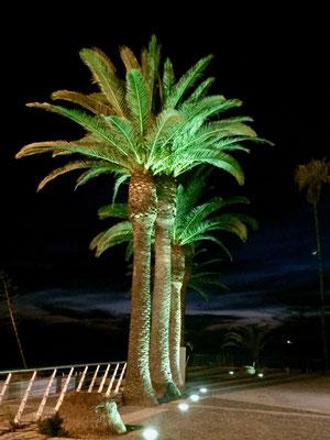 Nächtliches Palmenleuchten