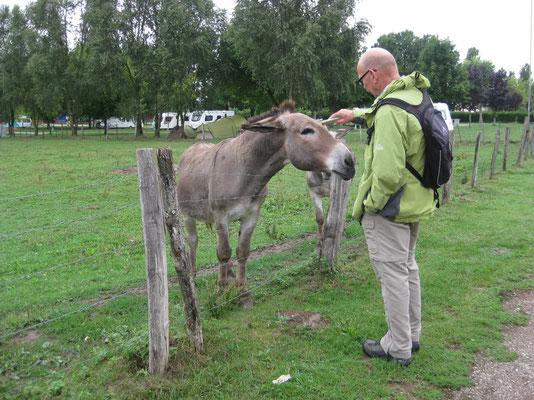 Ja, feins Eseli - auf dem Weg ins Städtchen Auxonne!