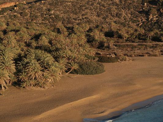 Europas grösster natürliche Palmenhain