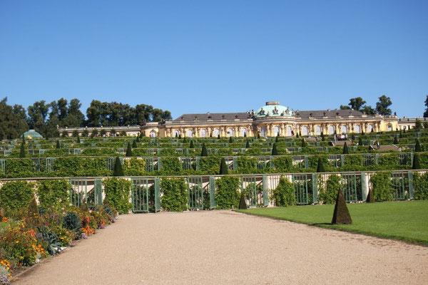 Schloss Sanssouci umgeben von Weinreben
