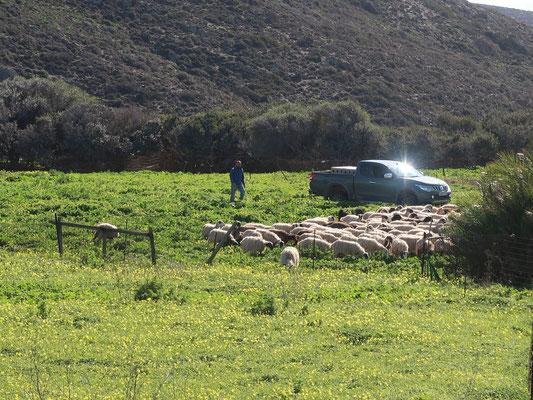 Er zählt seine Schafe nicht vor dem Einschlafen :-)