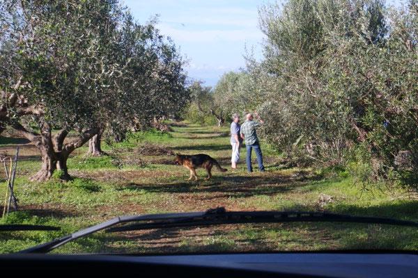 Anne und Barni beim Olivenlatein