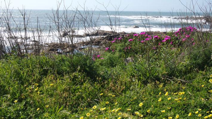 Frühling am wilden Atlantik