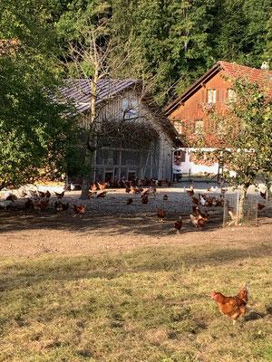 Hofidylle gleich um die Ecke, wo es im Hofladen nicht nur frische Eier zu kaufen gibt