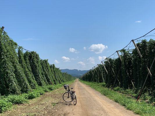 Bier in rauen Mengen in Aussicht - und das in Slowenien, man lernt immer dazu!