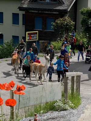 Die kleinen Hotelgäste auf dem begleiteten Alpaka-Spaziergang