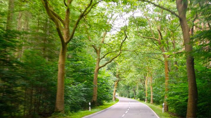 Kilometerlange Alleen-Strassen erscheinen uns wie grüne Tunnels