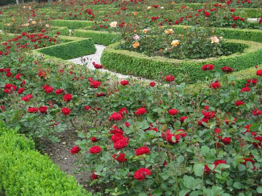 Nicht nur für Rosenfreunde