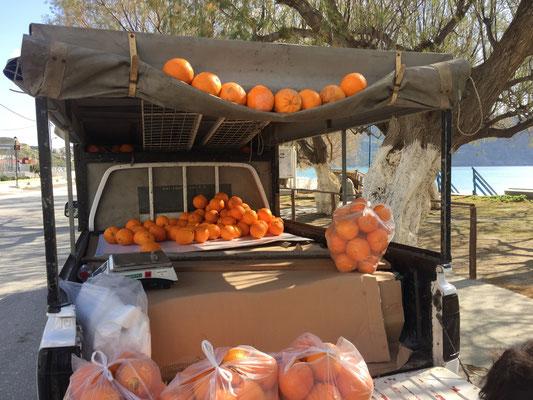 Der Orangen-Mann begrüsst uns mit seinen Prachtexemplaren