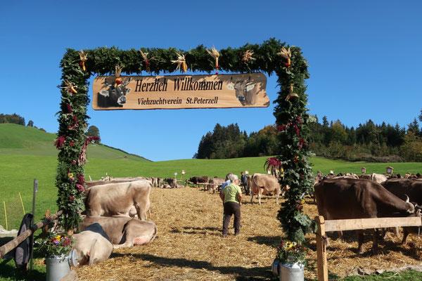 Typisch Schweiz!