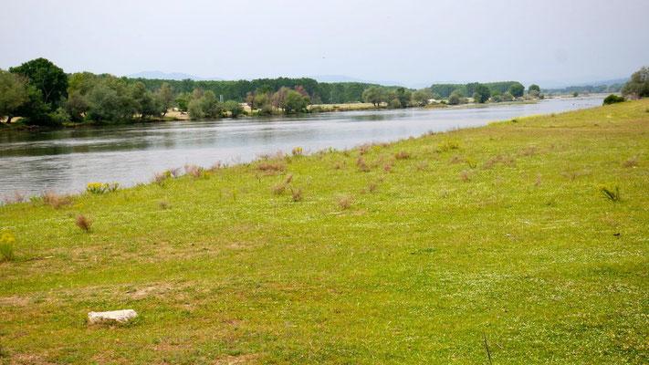 Flusslandschaft im Norden ist ein wahres Natur- und Vogelparadies