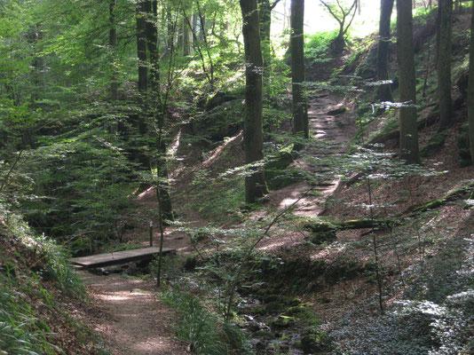 Auf der Wanderung mit Pilzsuche in Berdorf
