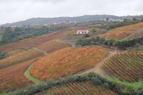 Blick in die älteste Weinregion,  Alto Douro - hier wird seit 2000 Jahren Wein angebaut