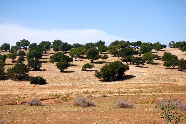 Typische Arganlandschaft im marokkanischen Südwesten