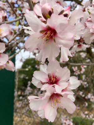 Blütenpracht noch vor dem Regen!