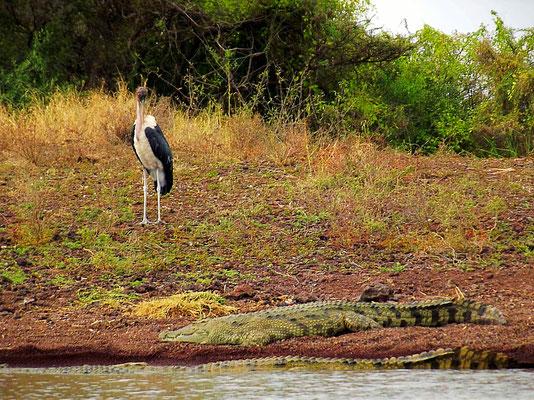 ©Textes-et-Photos-Pascal-Mawuli-Macé-Mawuli-Ethiopie-lake-Chamo-Nech-Sar-Arba-Minch-Ethiopie-Mawuli-Ethiopie- crocodile-du nil