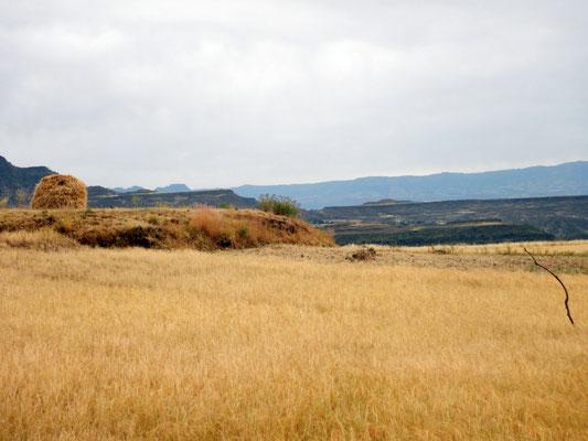 Un champs de teff.  Trek à  Lalibela en Ethiopie. Voyage Séjour Trekking et randonnée, Road Trip en Ethiopie.  Région Amhara