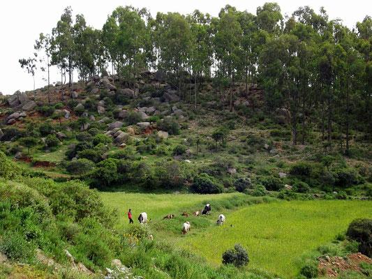 Météo Voyage Séjour Trek Trekking Randonnée Road Trip en Ethiopie Visite de la Vallée de l'Omo, de l'Oromia, de l'Amhara et du Tigré en Ethiopie.