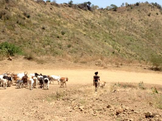 L'éleveur Mursi. Les Mursi en Ethiopie. Voyage Séjour Trek Trekking Randonnée Road Trip en Ethiopie Visite de la Vallée de l'Omo en Ethiopie.