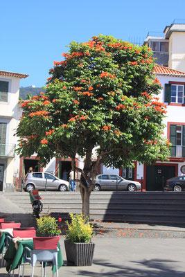 Funchal - Altstadt