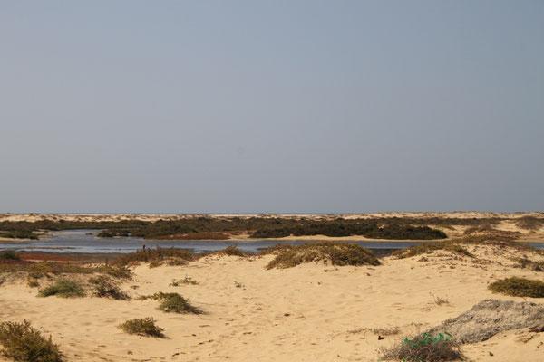 Strand und Salzwiesen