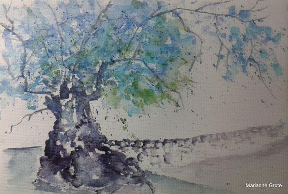 Olivenbaum, Aquarell 16 x 24 cm