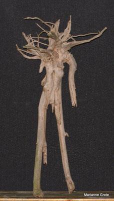 Der Verwirrte, Baumwurzel, 1,60 m