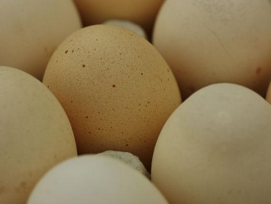 association llb -  marché de producteurs du jura - vente directe à bletterans