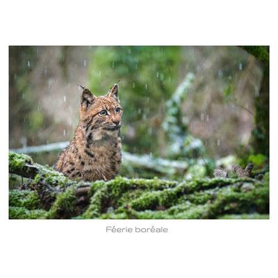 mehdi achèche - photographe animalier - franche comté