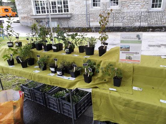cyril et le jardin ethnobotanique, installé à francheville - foire aux plantes de lons le saunier - association llb