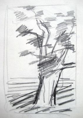 Baumstudien, Bleistift auf Papier, Aquarellfarben