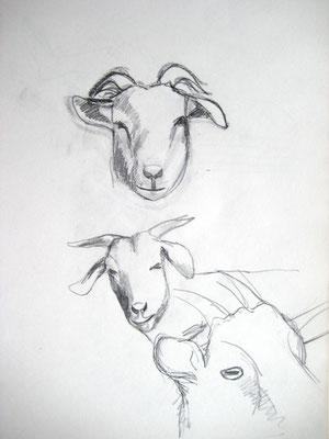 Haustiere, Studien Bleistift auf Papier