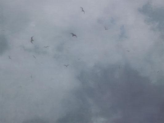 Birds 3 120x160cm 2019