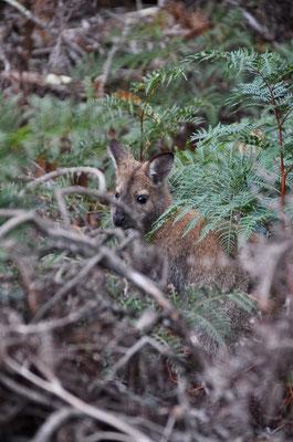 Mal versteckten sie sich irgendwo im Gebüsch (gäll gsehsch mi nid?)