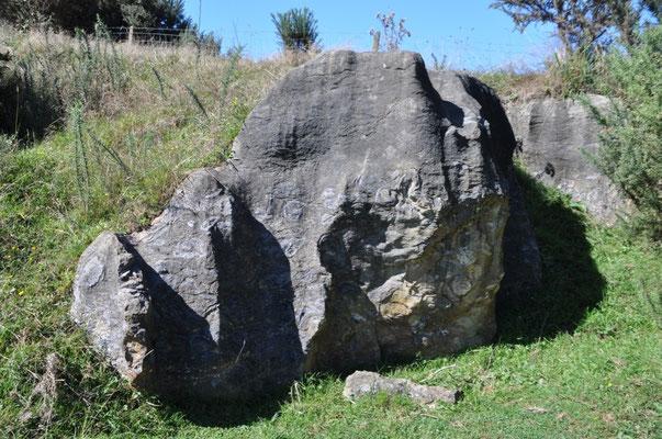 Steine mit Fossilien