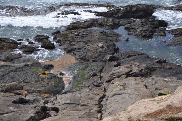 Wir haben noch nie so viele Seelöwen in freier Wildbahn gesehen.
