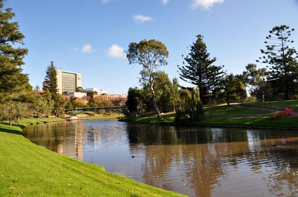 Spaziergang entlang des Torrens River, welcher uns auch am Botanischen Garten vorbeiführte.